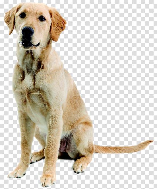 Singing dog clipart graphic transparent stock Adult brown Labrador retriever , New Guinea singing dog ... graphic transparent stock
