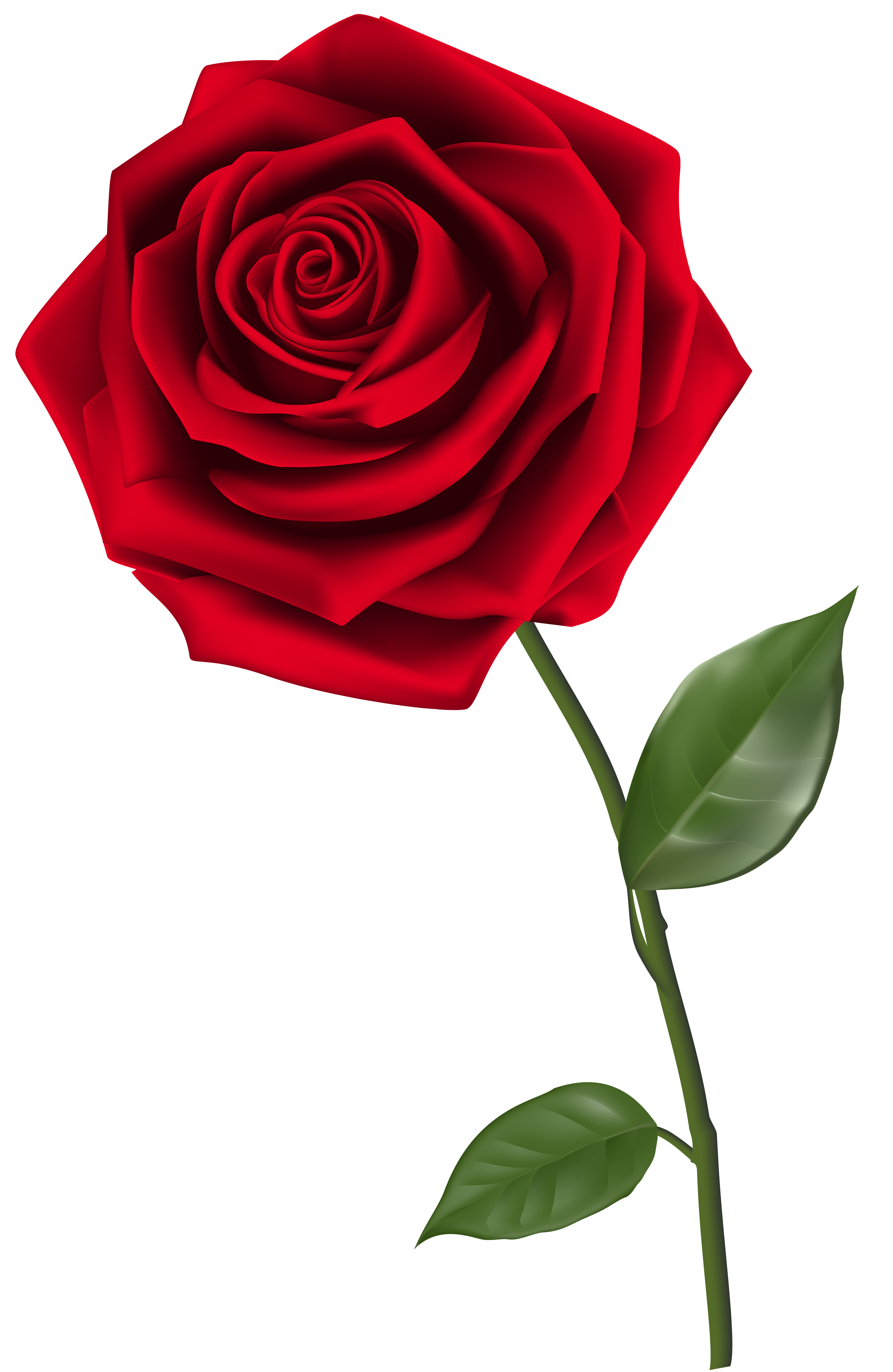 Single red rose clipart clip art royalty free Single Red Rose PNG Clipart Image | Gallery Yopriceville ... clip art royalty free