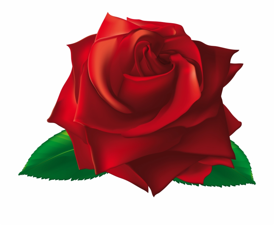 Single rose petal clipart stock Red Single Rose Png Clipart Image - Single Rose Image Png ... stock