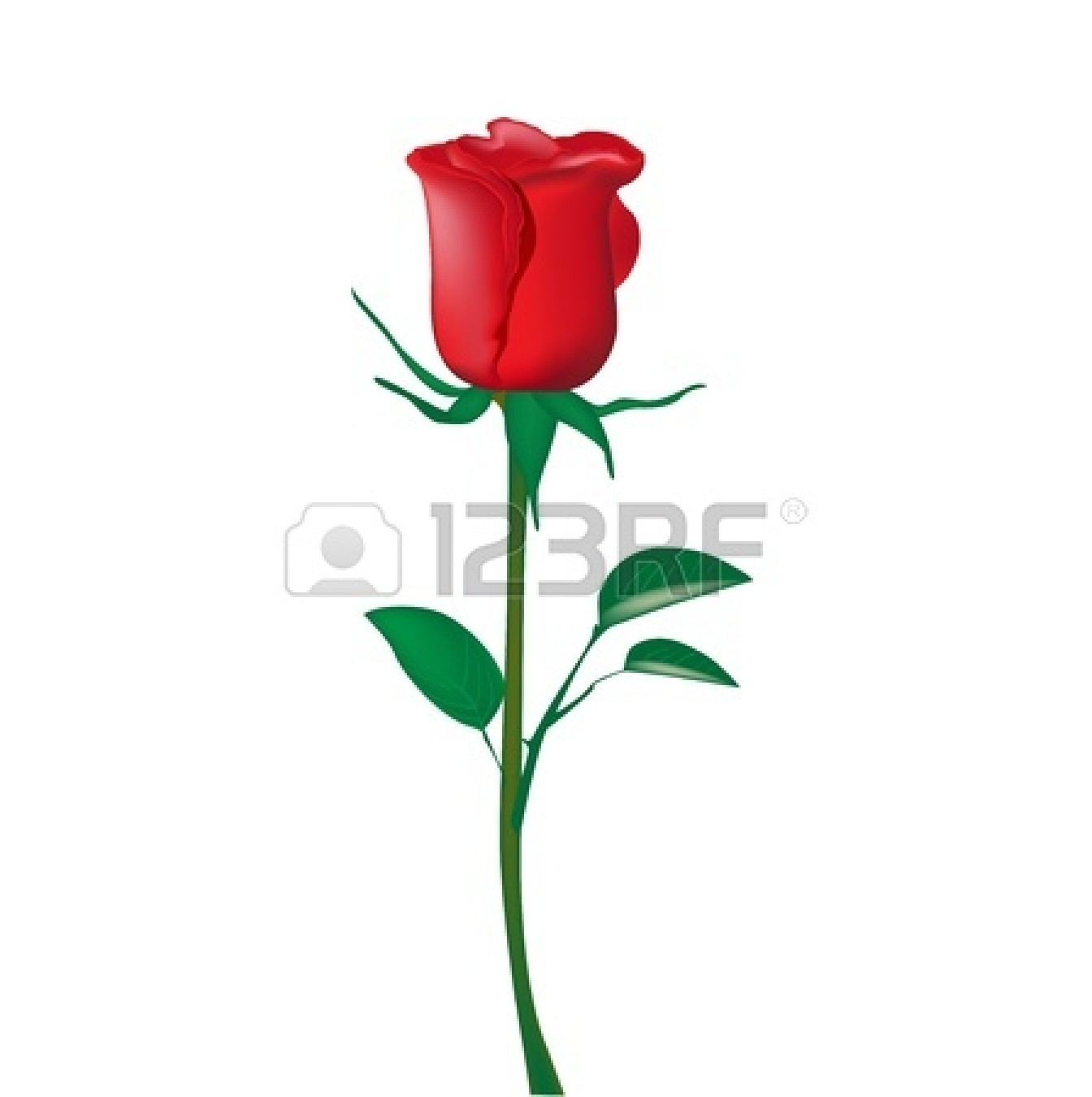 Single rose pictures clipart png freeuse library Rose Image | Free download best Rose Image on ClipArtMag.com png freeuse library