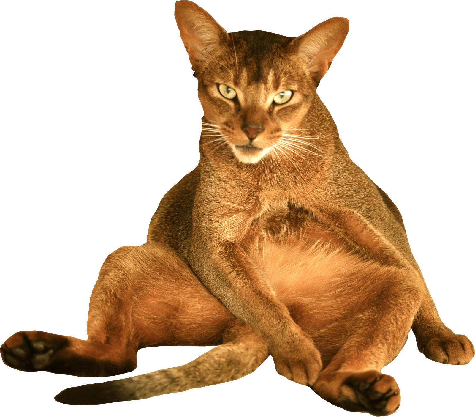 Sitting cat clipart clip free download Free Cat Images: free digital sitting cat png with transparent ... clip free download