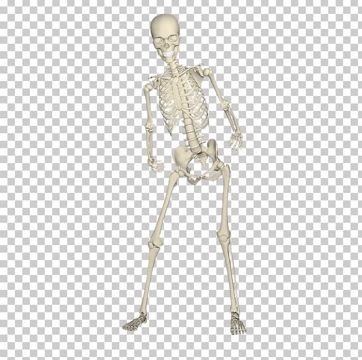 Skeletal corpse clipart png royalty free Human Skeleton Bone Skull PNG, Clipart, Anatomy, Arm, Bride ... png royalty free