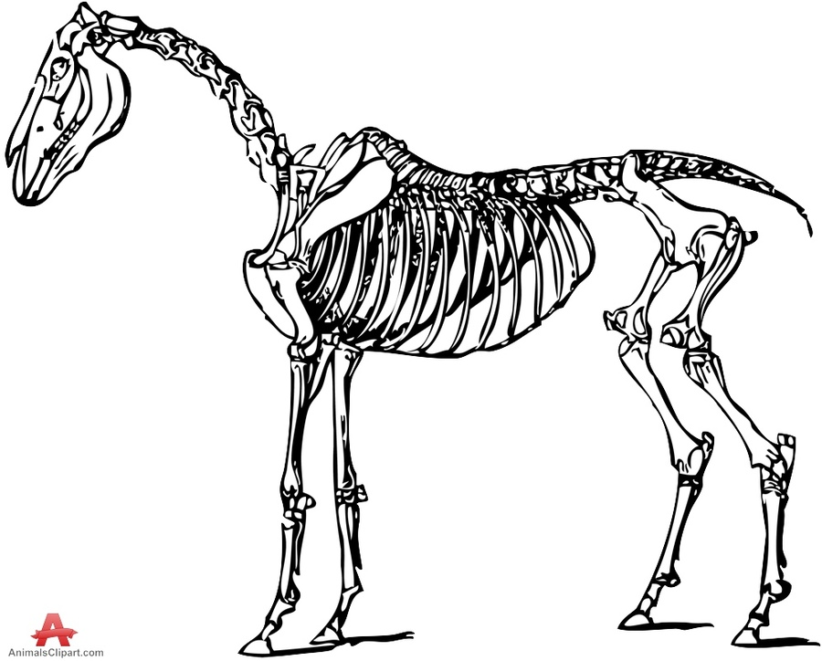 Skeleton animal clipart graphic freeuse library Download horse skeleton high res clipart Skeletal system of ... graphic freeuse library