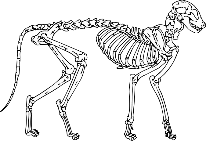 Skeleton cat clipart banner black and white stock Cat Skeleton Drawing at GetDrawings.com | Free for personal use Cat ... banner black and white stock