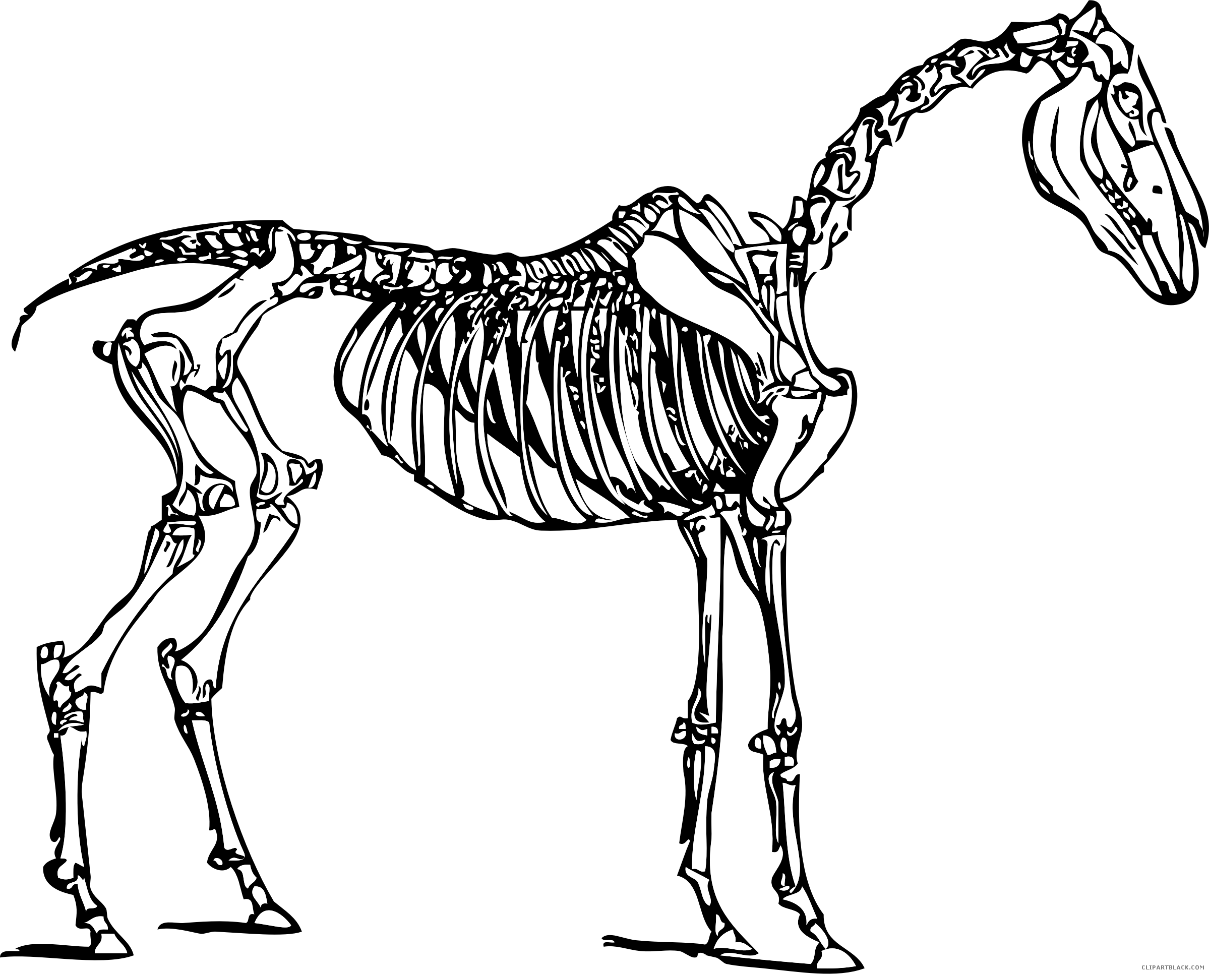 Skeleton cat clipart picture Horse Skull and Skeleton Clipart - ClipartBlack.com picture