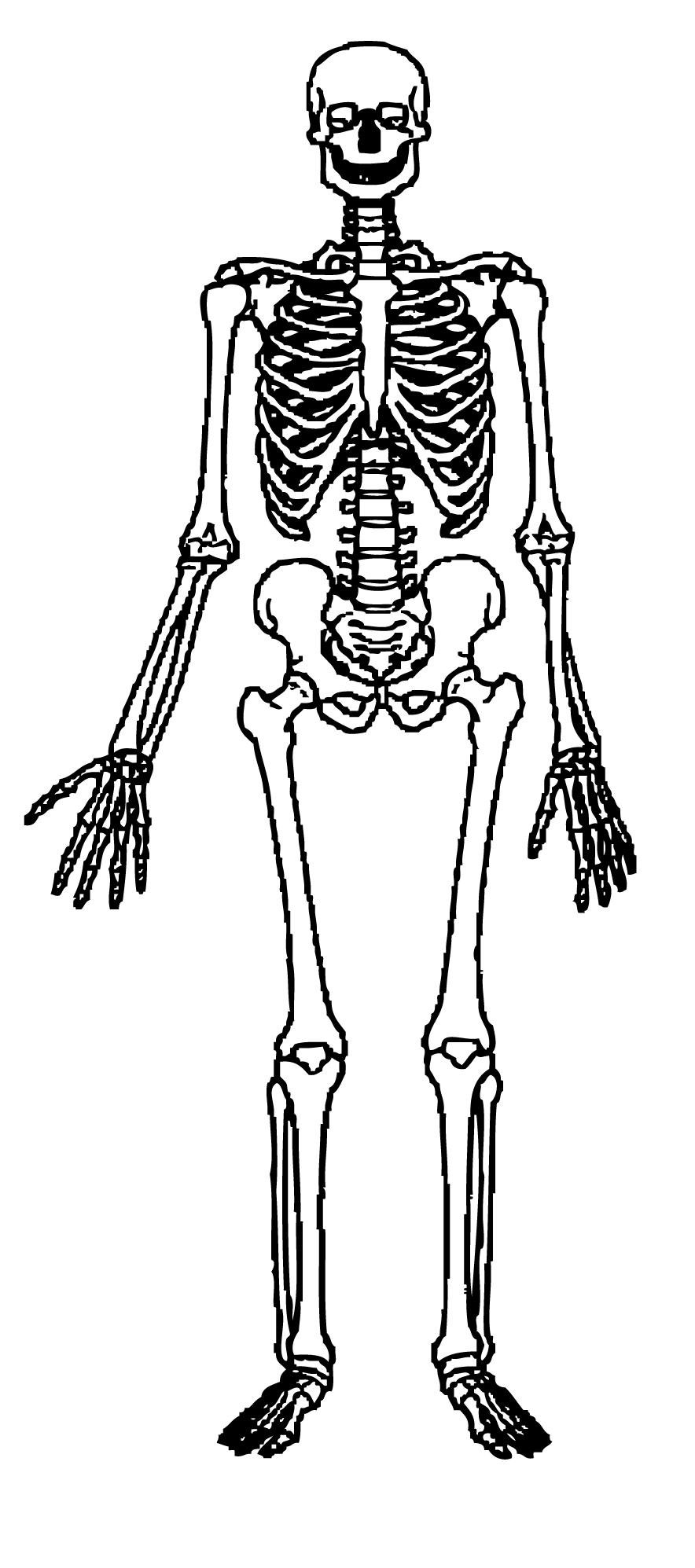 Skeleton clipart for kids jpg freeuse library Free Skeleton Clip Art Pictures - Clipartix jpg freeuse library