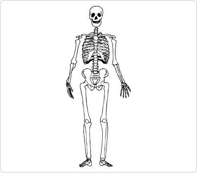 Skeleton clipart for kids banner stock Skeleton clipart kid 2 - Cliparting.com banner stock