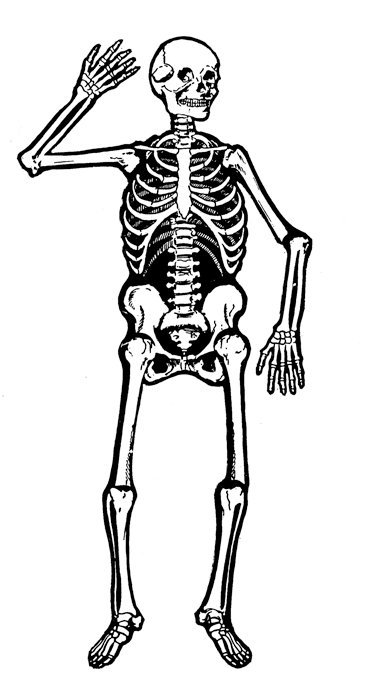 Skeleton clipart waving png royalty free download Free skeleton clip art pictures clipartix 2 - Cliparting.com png royalty free download