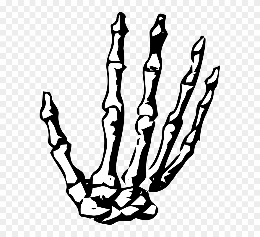 Skeleton hand clipart vector free stock Hand, Skeleton, Skeleton Hand, Halloween, Human, Bone ... vector free stock