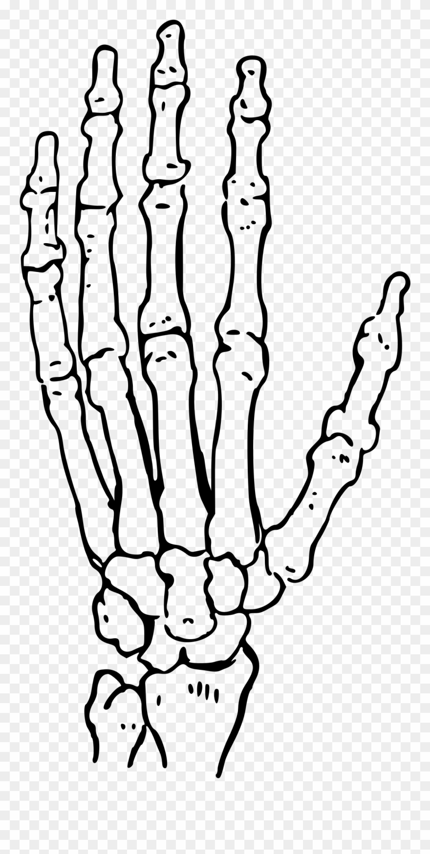 Skeleton hand clipart black and white download Bones Of The Hand Big Image Png - Black And White Skeleton ... black and white download