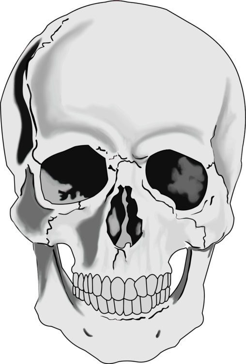 Skeleton head clipart free png royalty free Skeleton skull clip art clipart images gallery for free ... png royalty free