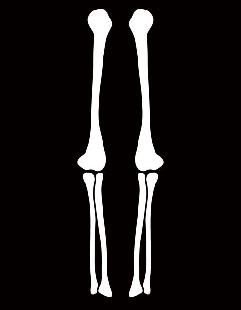 Skeletons leg clipart picture skeleton arm stencil - Clip Art Library picture