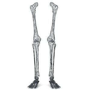 Skeletons leg clipart graphic freeuse library Leg Bone Clipart images graphic freeuse library