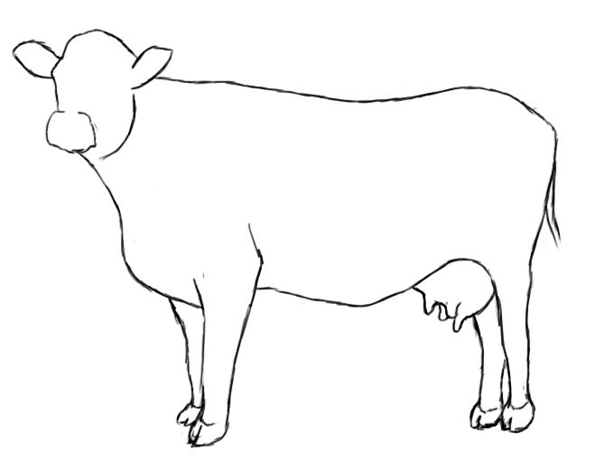 Sketch of cattle clipart clip library library How To Draw A Cow   Drawing   Cow drawing, Drawings, Cow ... clip library library