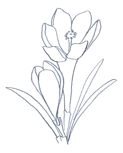 Sketched flowers clipart png Flower Sketches png