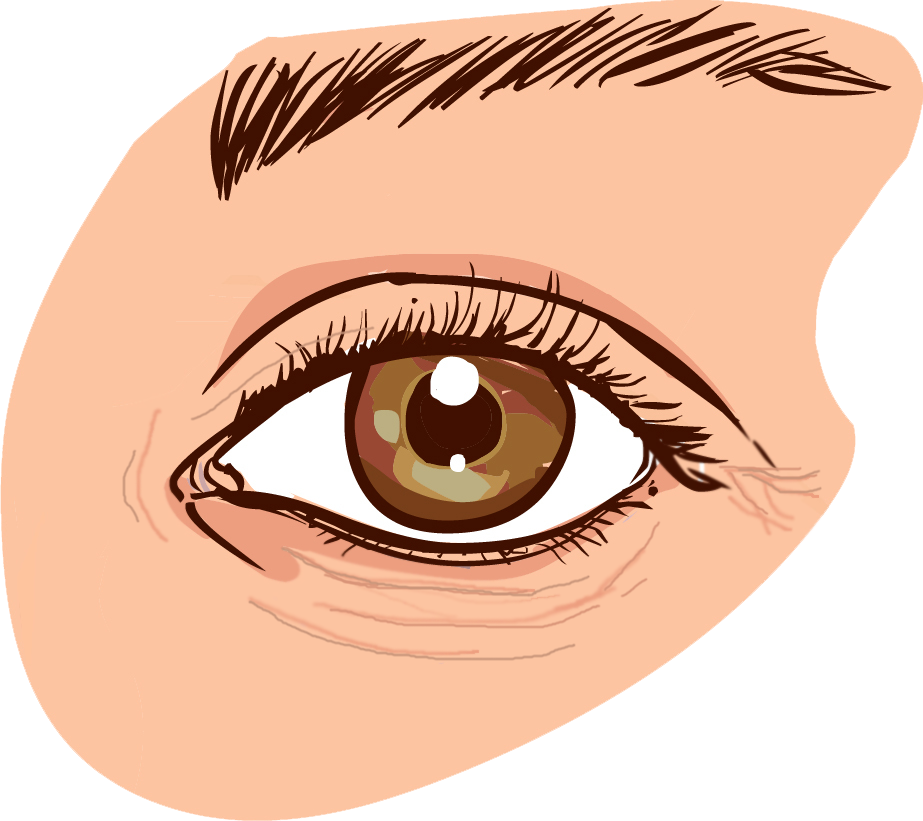 Skin wrinkles clipart clipart black and white library Face,Eye,Eyebrow,Brown,Organ,Iris,Eyelash,Head,Skin,Cartoon ... clipart black and white library