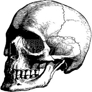 Skull art clipart freeuse download vintage vector three quater view skull art clipart. Royalty-free clipart #  403114 freeuse download
