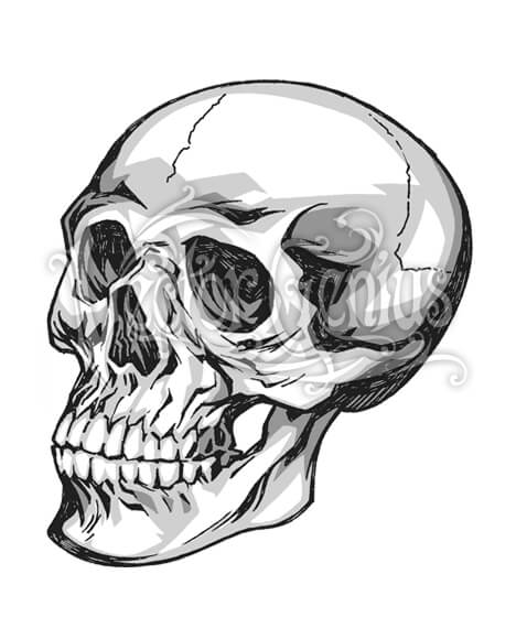 Skull pictures clipart clip Hand Drawn Skull Skeleton ClipArt clip
