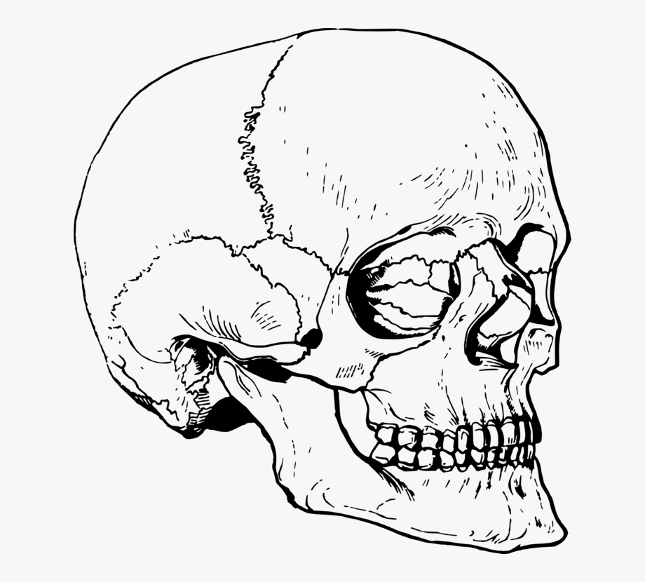Skull drumsticks clipart clip free Drawing Drums Skeleton - Skull #1182787 - Free Cliparts on ... clip free