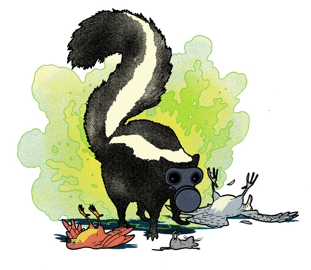 Skunk spraying human clipart vector freeuse library Do Skunks Hate The Smell Of Their Own Spray? | Popular Science vector freeuse library