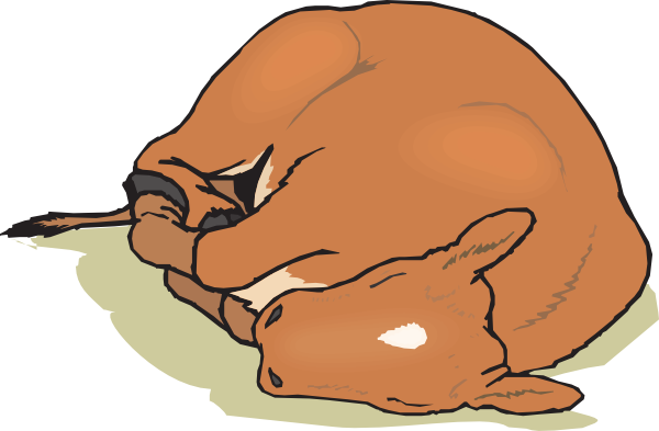 Sleeping brown cow clipart clipart freeuse library Free Calf Cliparts, Download Free Clip Art, Free Clip Art on ... clipart freeuse library
