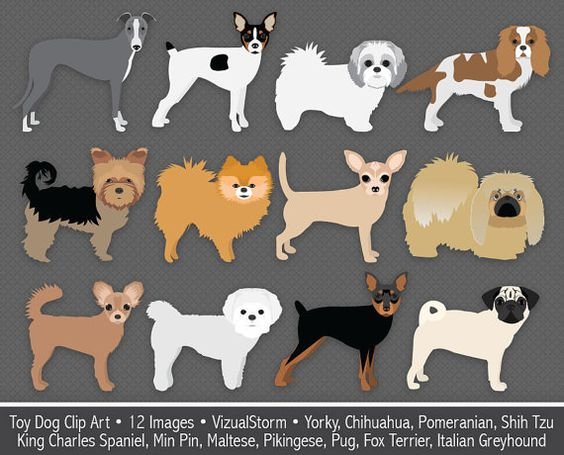 Small cute dog clipart graphic free library Cute Dog Clipart Toy Breed Chihuahua Pinscher Pomeranian Yorkshire ... graphic free library