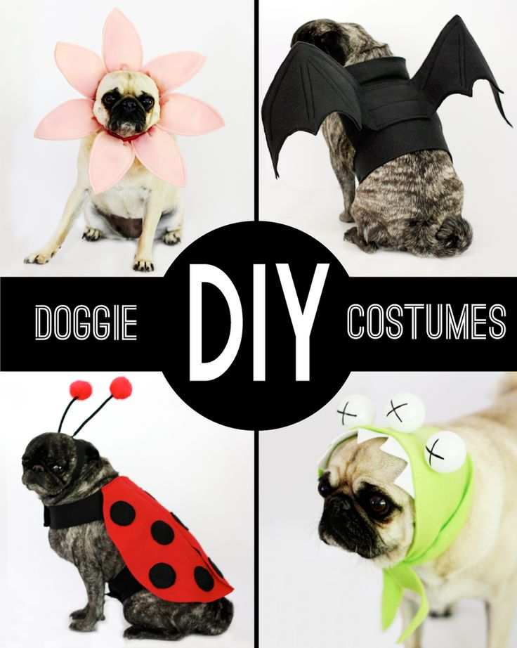Small government dog clipart clip free 17 Best ideas about Dog Costumes on Pinterest | Dog halloween ... clip free