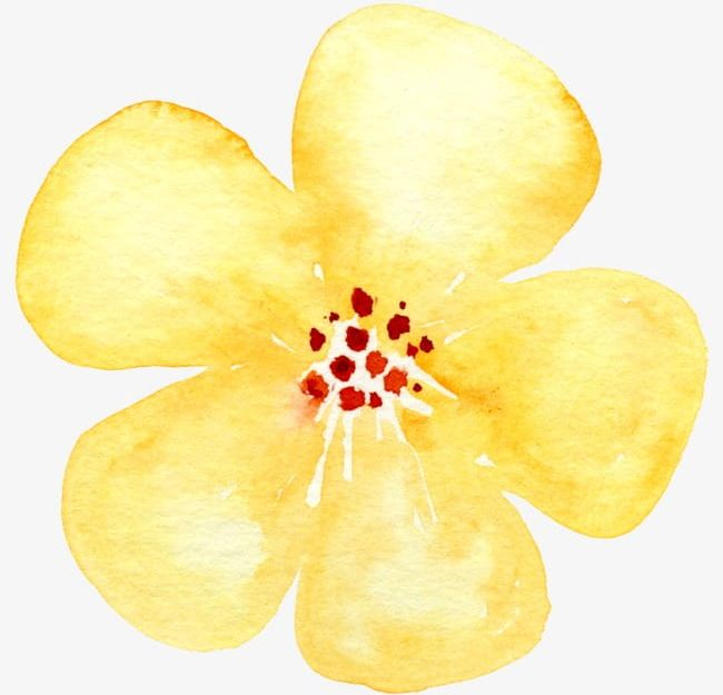 Small yellow flowers clipart graphic transparent download Small Yellow Flowers PNG, Clipart, Flower, Flowers Clipart ... graphic transparent download