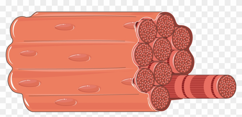 Smooth muscle clipart jpg library Muscles Clipart Smooth Muscle - Muscle Fiber Png ... jpg library