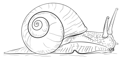 Land snail coloring page | Free Printable Coloring Pages png library stock