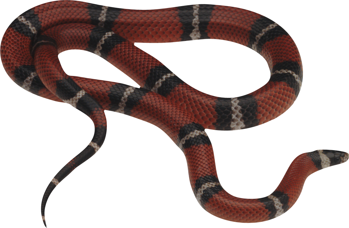 Snake and apple clipart svg royalty free stock Snake clipart water snake ~ Frames ~ Illustrations ~ HD images ... svg royalty free stock