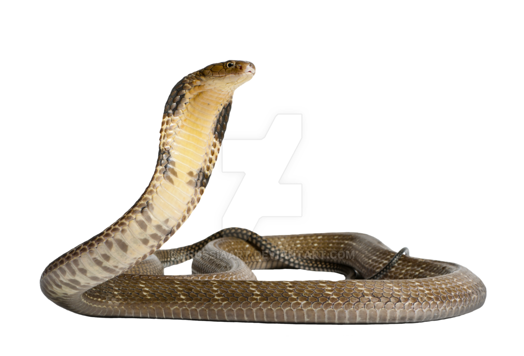 Snake editing clipart banner royalty free library Snake PNG Images Transparent Free Download | PNGMart.com banner royalty free library