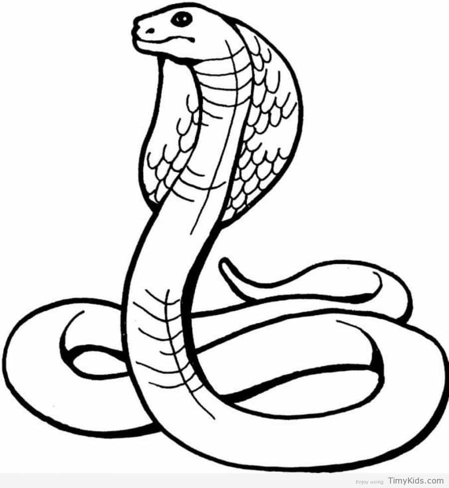 Snake full size clipart png freeuse download coloring ~ Snake Coloringt Page Pages For Kids Timykids Free ... png freeuse download