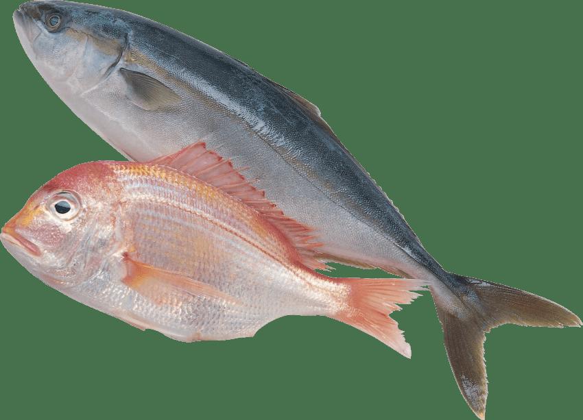 Snapper fish clipart clip transparent download fish png - Free PNG Images | TOPpng clip transparent download