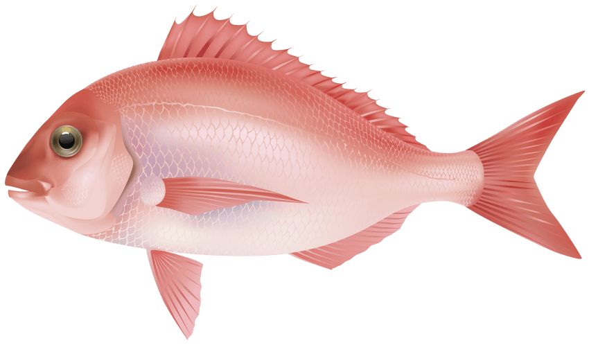 Snapper fish clipart clip library download fish png - Free PNG Images | TOPpng clip library download