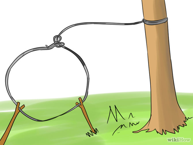 Snare trap clipart clip art free Snare Traps | My Survival Forum | Survivalist, Prepper, SHTF ... clip art free