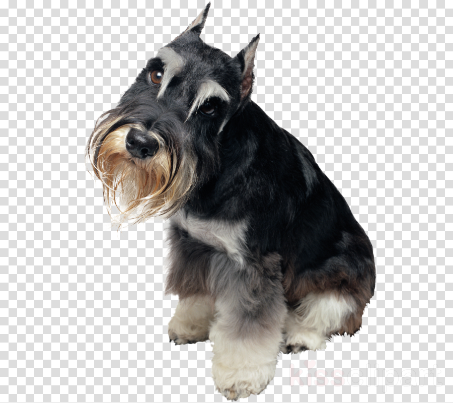 Snauzer clipart clip download Forest Cartoon clipart - Puppy, Pet, Dog, transparent clip art clip download