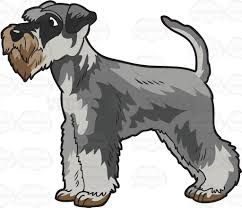 Snauzer clipart image free download Image result for SCHNAUZER, clip art | Dog Love! | Miniature ... image free download