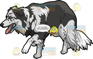 Sneaking out clipart picture black and white library A Border Collie Sneaking Up On Something picture black and white library