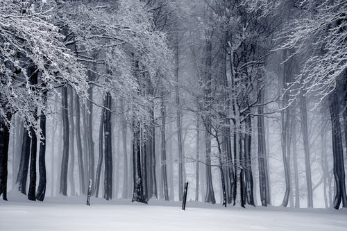 Winter pictures · Pexels · Free Stock Photos clipart free