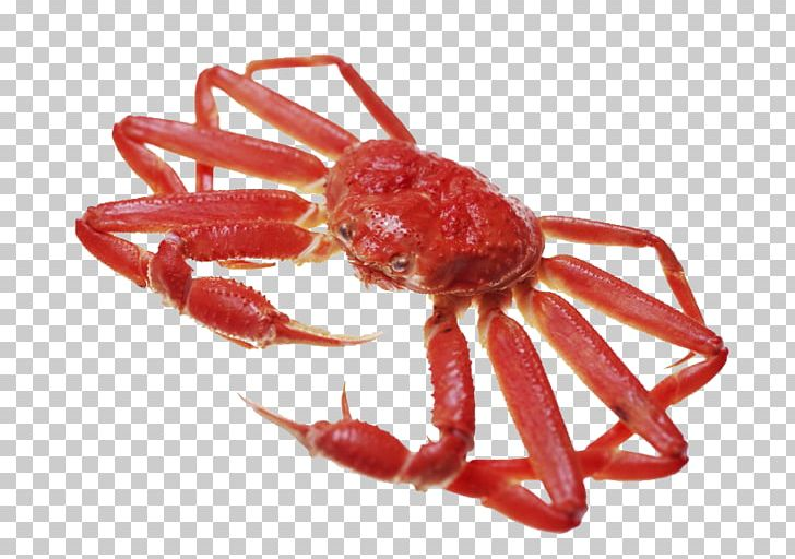 Snow crab clipart graphic freeuse Dungeness Crab Sakaiminato Snow Crab Stock Photography PNG ... graphic freeuse