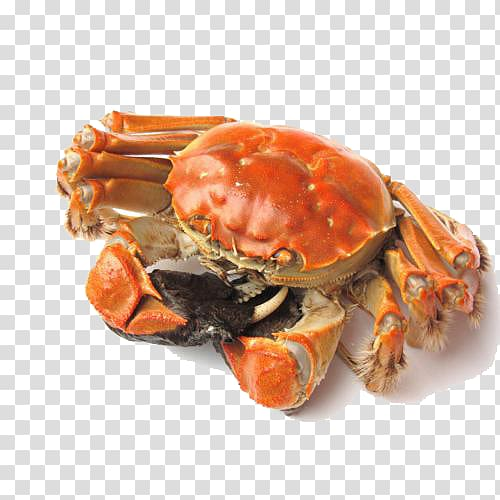 Snow crab clipart clip free Yangcheng Lake Panjin Chinese mitten crab Snow crab, Wild ... clip free