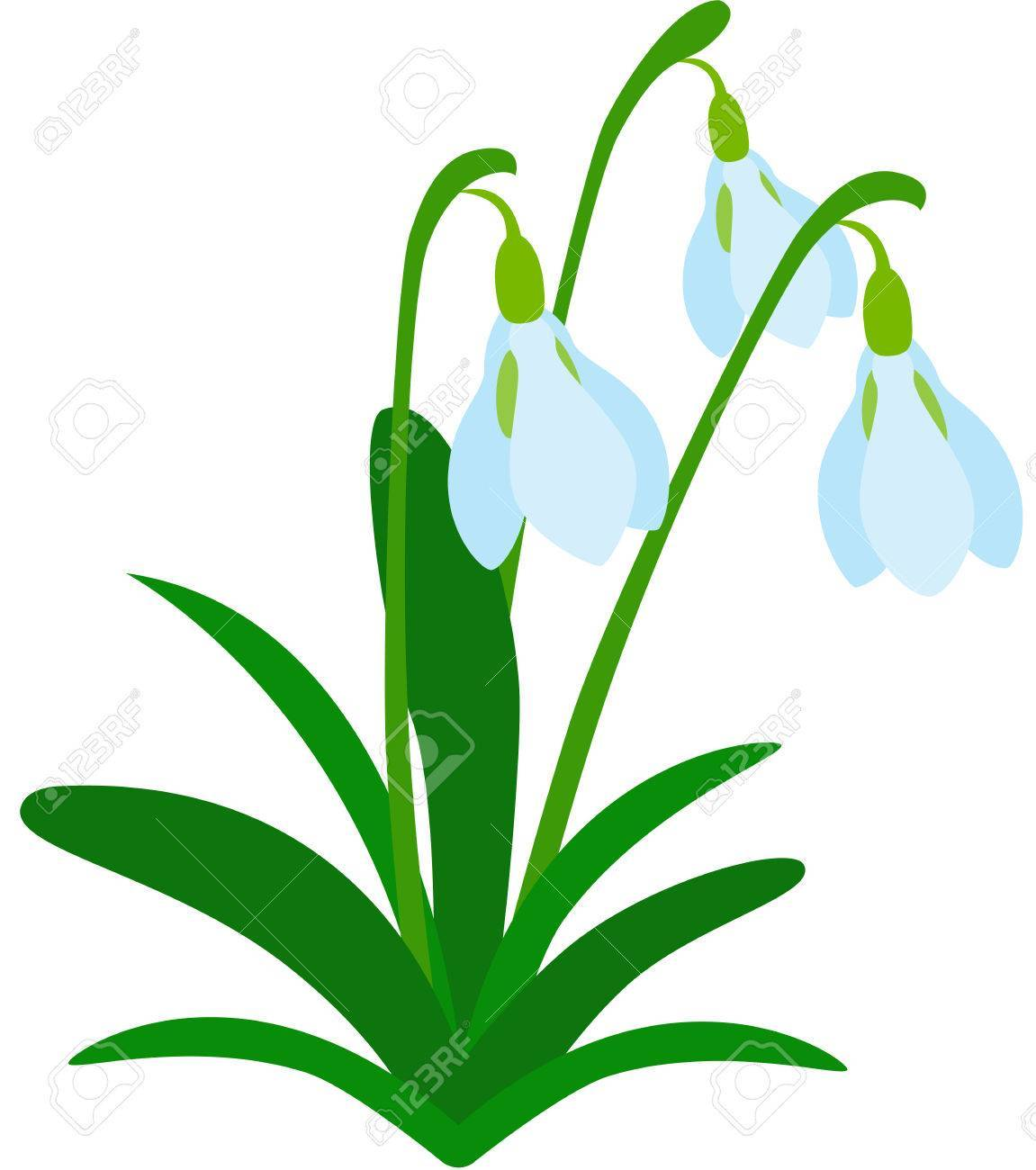 Snowdrop pictures clipart jpg free download Snowdrop clipart 4 » Clipart Portal jpg free download