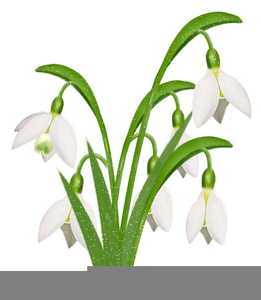 Snowdrop pictures clipart vector download Snowdrop Clipart | Free Images at Clker.com - vector clip ... vector download