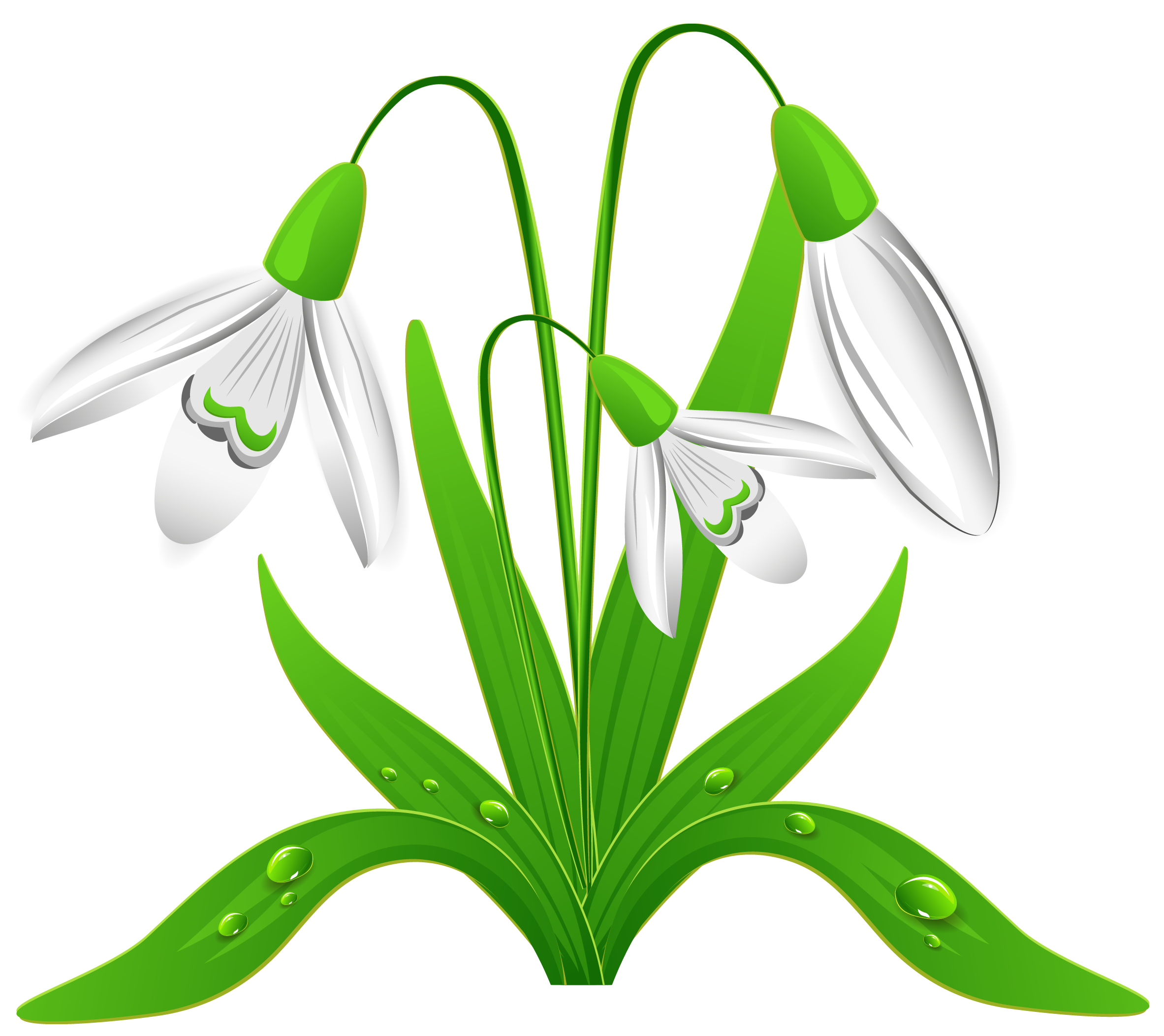 Snowdrop pictures clipart banner freeuse download Spring Snowdrops PNG Clipart Picture | Gallery Yopriceville ... banner freeuse download
