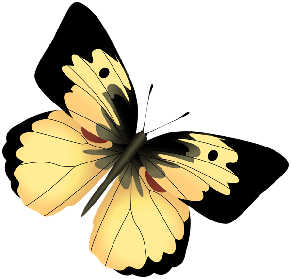 Snowflake butterfly clipart download Gallery - Free Clipart Pictures download