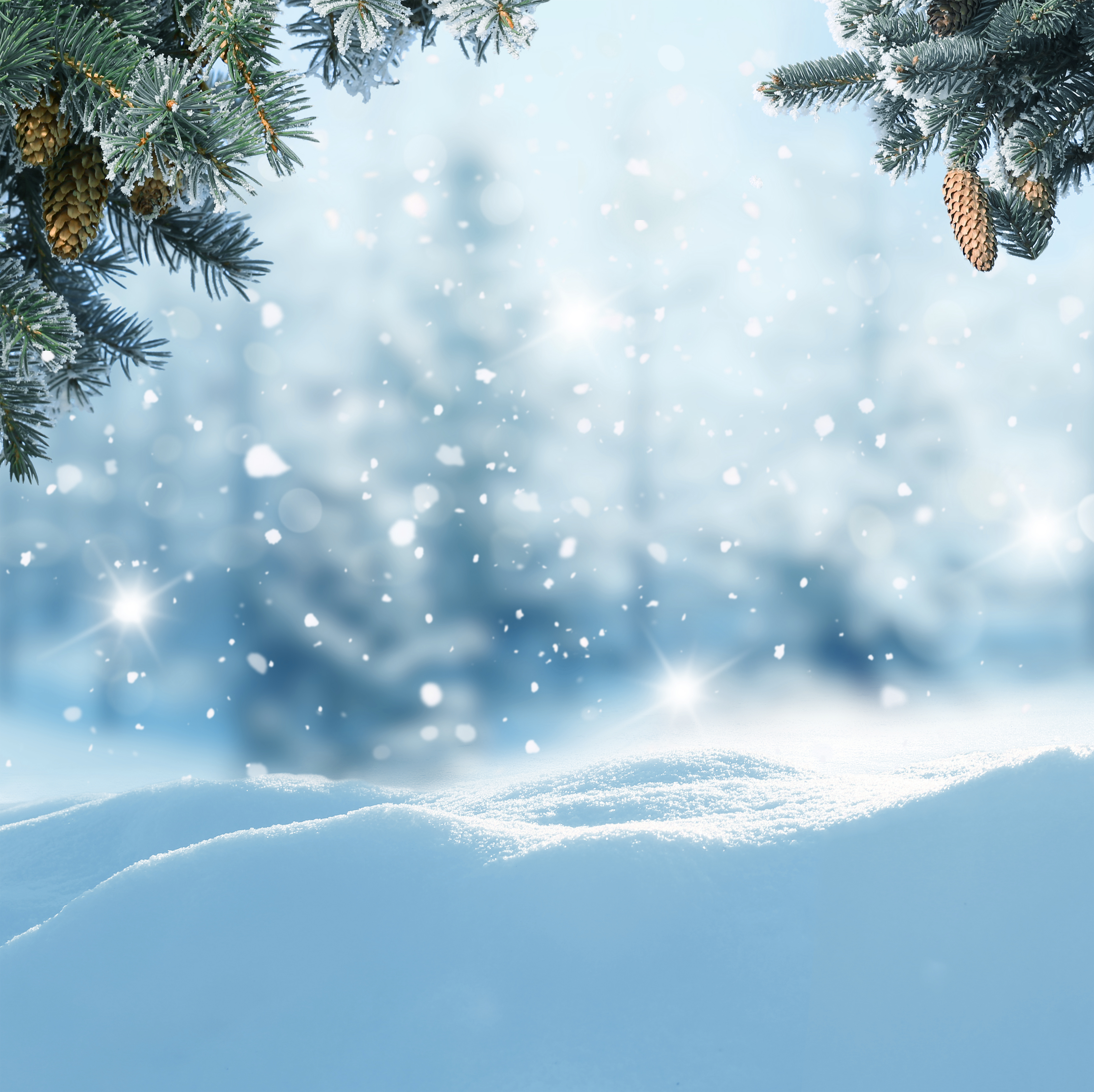 Snowy background clipart svg transparent Winter Snowy Background with Pine Branches | Gallery ... svg transparent