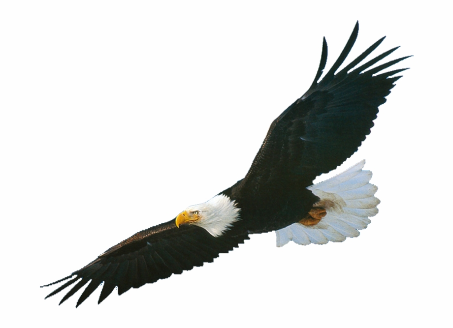 Soaring eagle clipart vector freeuse download Black Eagle 4 1 Thumb - Soaring Eagle Free PNG Images ... vector freeuse download