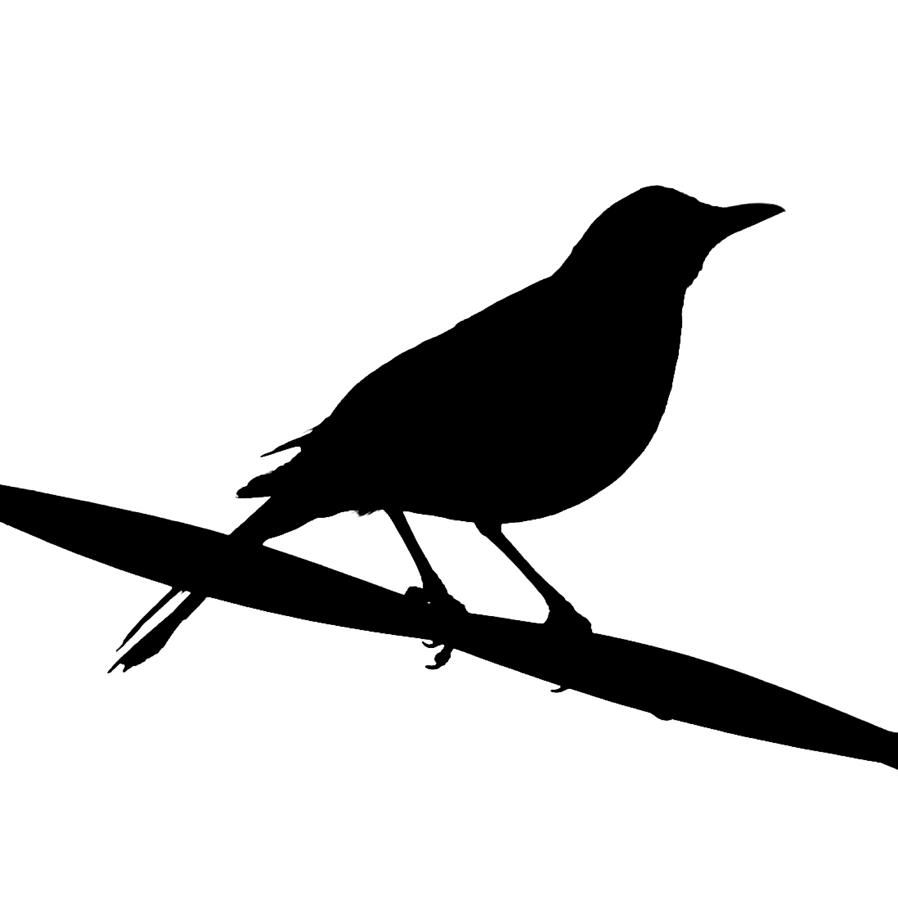 Songbird clipart clipart freeuse download Songbird Clipart - Viewing Gallery | Cover Me! | Birds, Bird ... clipart freeuse download