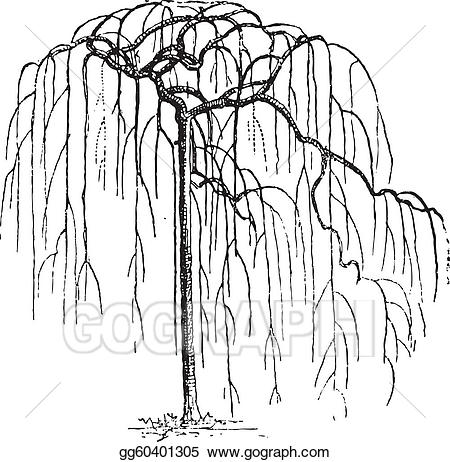 Sophora japonica clipart picture freeuse stock EPS Illustration - Sophora japonica or japanese pagodatree ... picture freeuse stock